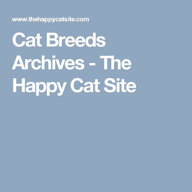 Cat Breeds Archives - The Happy Cat Site