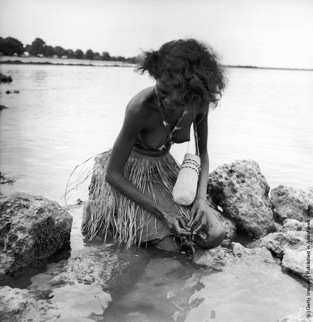 An Aborigine woman searches for shellfish to store in her woven dilly bag in Arnhem Land, in the Northern Territory of Australia, circa 1950. (Photo by Three Lions/Hulton Archive/Getty Images)
