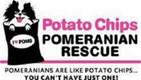 Pomeranian Rescue and adoptions