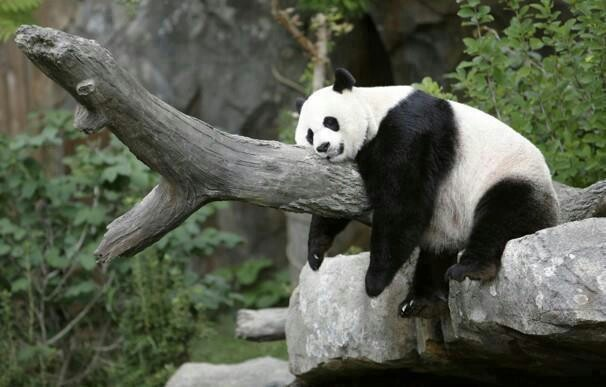 Lazy Panda | i love animals | Pinterest