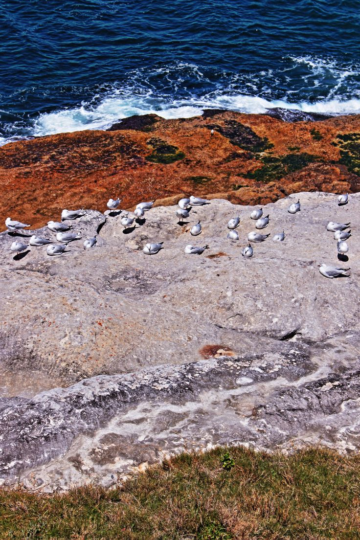 Gulls on the rocks - from the top of the cliff - I liked the layers of colour too.