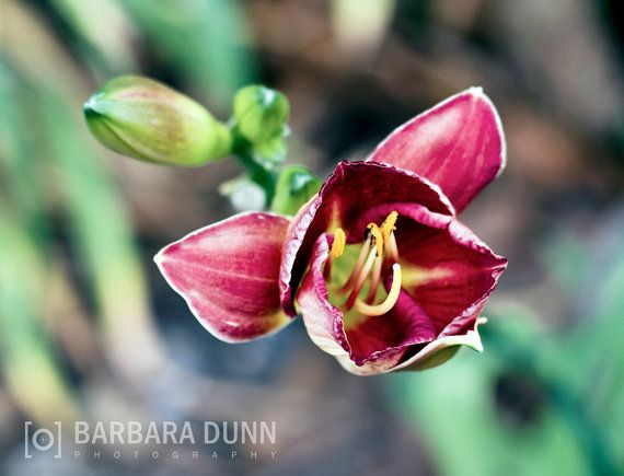 Solo Bloom in the Park Digital Photograph by BarbaraDunnPhotos, $10.00