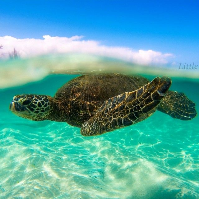 Okay, one more pic and Honu will have to have a Honu Board!!