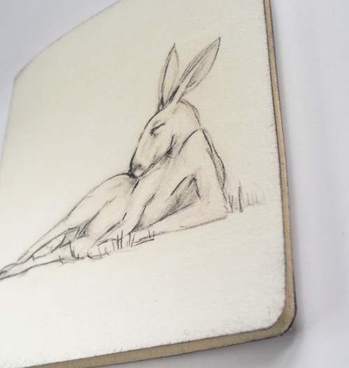 kangaroo sleeping  greeting card  $1.50