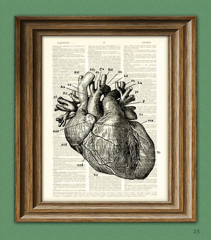 It's a HUMAN HEART diagram beautifully upcycled dictionary page book art print. $7.99, via Etsy.