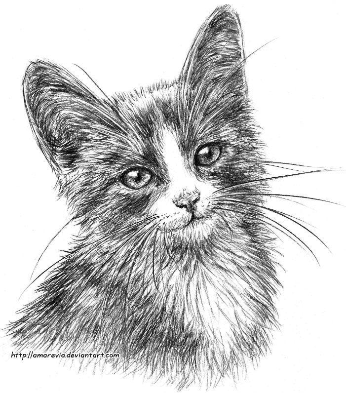 Smiling kitten by Amarevia on DeviantArt