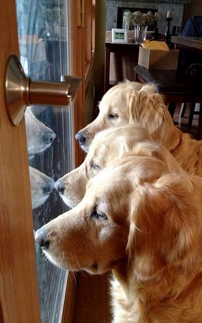 Waiting for mom to come home