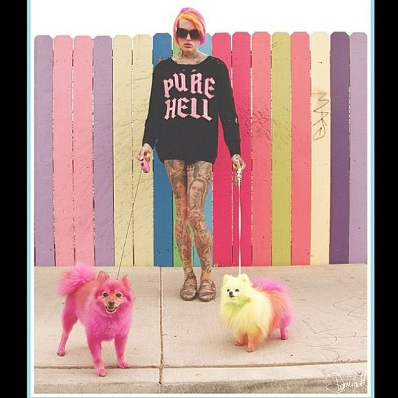Jeffree Star and his cute dogs!