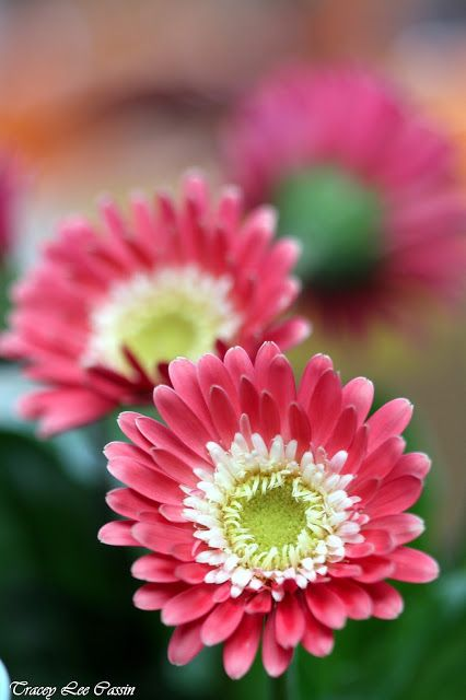 Mia Bella Passions:  Tracey Lee Cassin photography shares beautiful flower images to frame gift or keep.