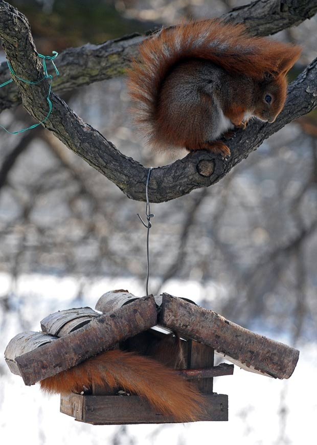 Esquilos são flagrados 'roubando' comida de alimentador para pássaros