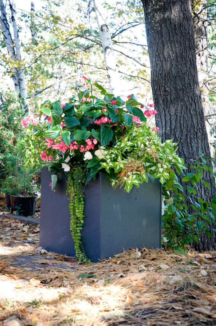 1000 images about outdoor planter boxes on pinterest to for Loll planters