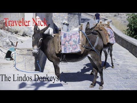 Traveler Nick: Lindos and it's hard working donkey 4k Lindos ed i... #lindos #rhodes #greece