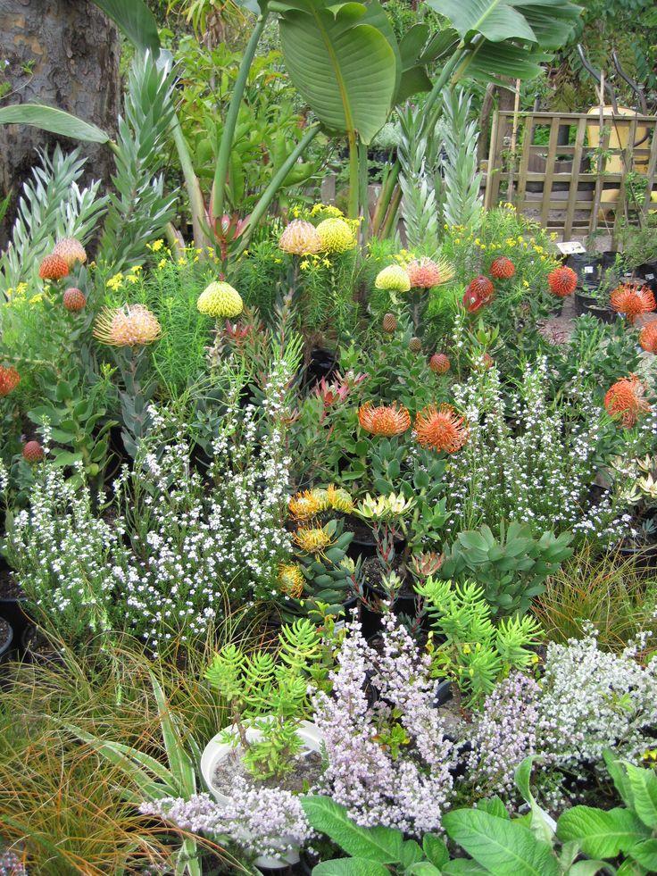 Cape Flora Garden landscape