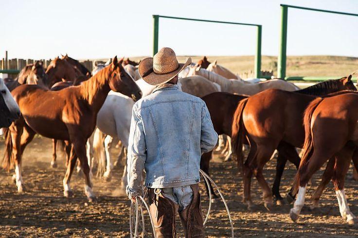 Z Bar H Cattle 435 best Horses images...