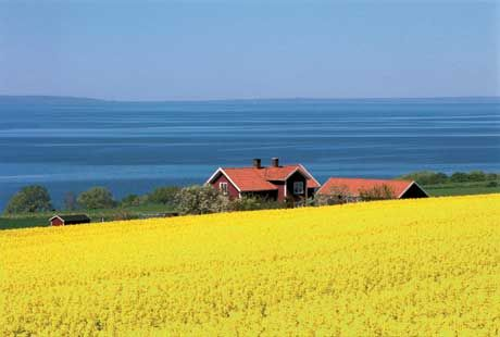 SwedenSouthern Sweden, Little Red, Summer Photos, Summer House, Summer Scene, Sweets Swedish, Cottages, Places, Swedish Summer