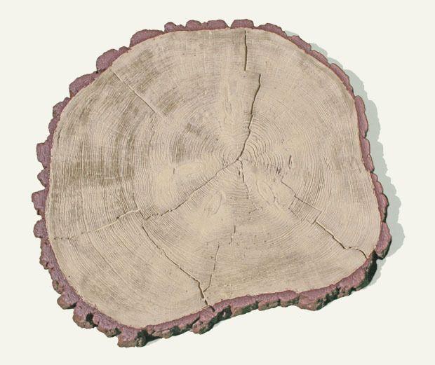 Plasterpnia drzewa fi 54 cm