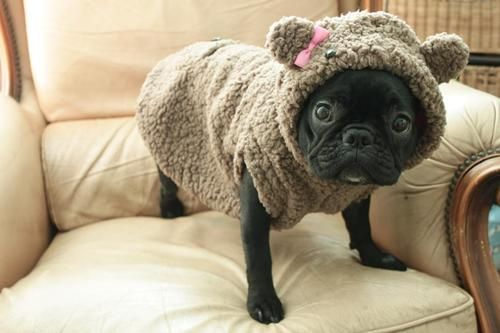 oh come on now. thats just not even fair..can't resist how cute it is...