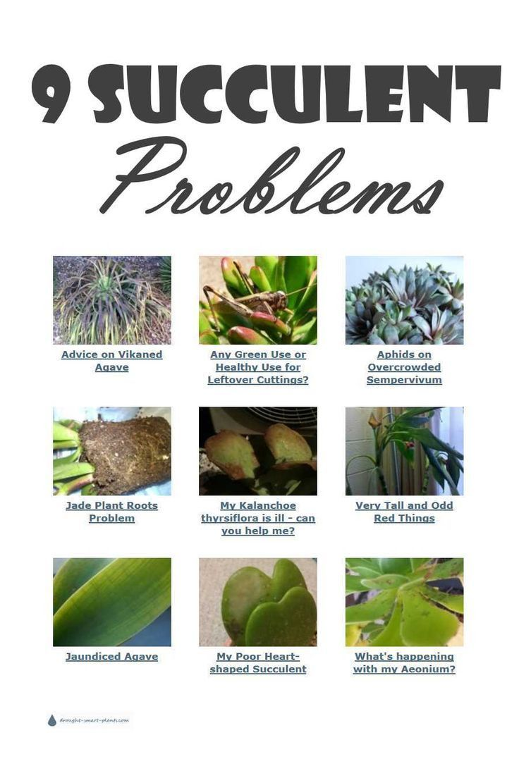 9 Succulent Problems The Horticulturist Answers Jade Plants Succulents Planting Succulents