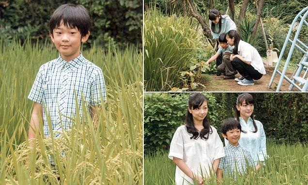 9/6/16*Images show Prince Hisahito of Akishino with his sisters, Princess Kako and Princess Mako at a rice field of the Akishino-no-miya residence in Tokyo, Japan.