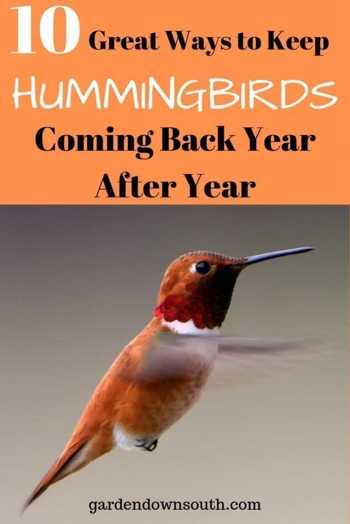 Keep Hummingbirds Coming Back Garden Down South Backyard Birds Sanctuary How To Attract Hummingbirds Humming Bird Feeders