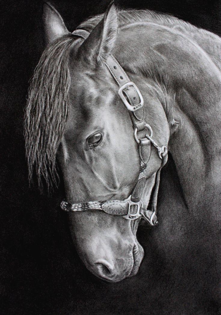 Best 25 dessin cheval ideas on pinterest animaux de - Desin de cheval ...