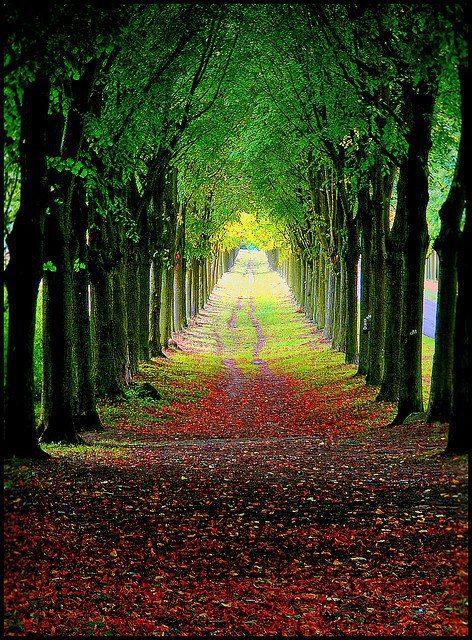 Avenue at the Castle Wilhelmstal, Landkreis Kassel, Hesse, Germany