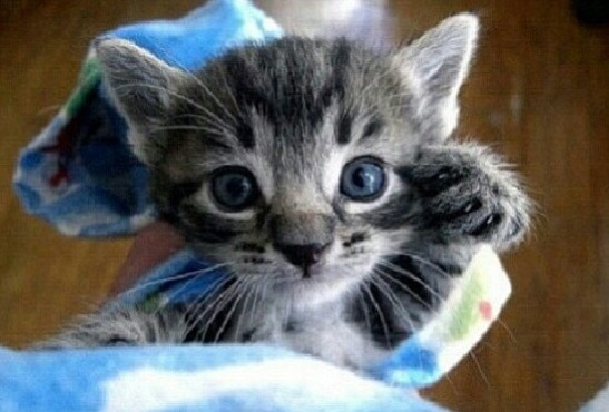 Little kitten :)
