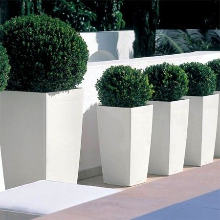 Box planters - outside front door mini trees (restoration hardware fake trees?)