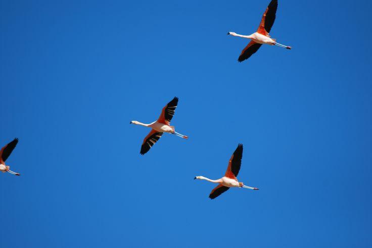 Aves en Torres del Paine
