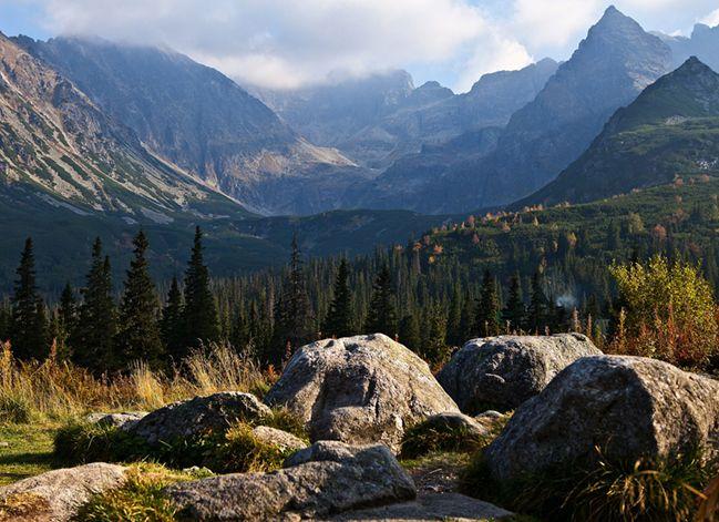 Ein einzigartiges Panorama mit dunklen Tannen und der wunderschönen Gebirgskette – die Hohe Tatra in der Slowakei.