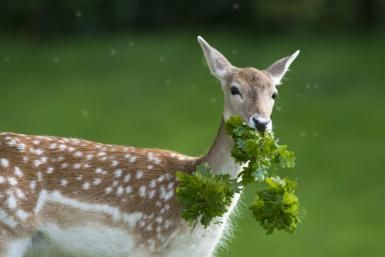 A State-by-State Guide to Deer Resistant Plants http://aggie-horticulture.tamu.edu/plantanswers/publications/deerbest.html