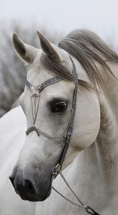 Beautiful horse and bridal