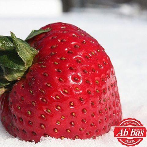 Ankara için kar zamanı! Soğuklar bizi korkutamaz, C vitaminlerine devam!