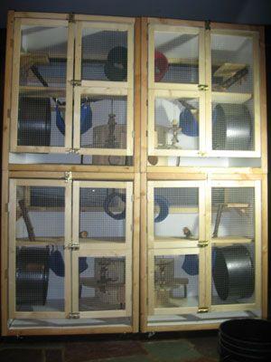 multi level bunny cage | Custom Chinchilla Cages For Sale