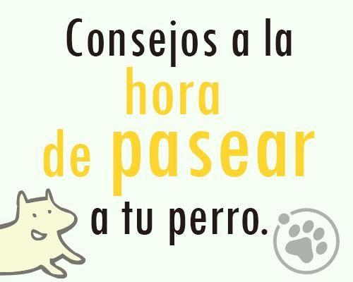 Consejos a la hora de pasear a tu perro. https://www.facebook.com/notes/orbita-pets/amigos-orbita-petsconsejos-a-la-hora-de-pasear-a-tu-perro/548135208663439