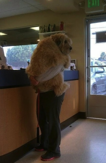 Big baby: Puppies, The Doctors, So Cute, Pet, Big Baby, Leaves Me, Funny Animal, Smile, Big Dogs