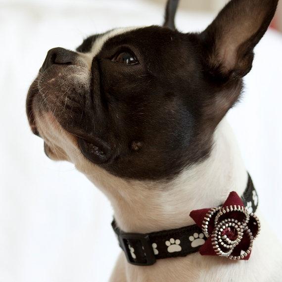 9 besten Doggy ideas Bilder auf Pinterest | Hunde, Hund zubehör und ...