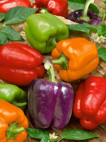2015: Year of the Sweet Pepper - Rainbow Bell Mix has big, bright glossy stuffing peppers in green, red, orange, yellow and purple.