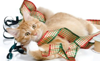 Tarheel Total Pet Care. If you are traveling over the holidays to see family this year, we would love to watch your pets for you! Call 908-234-0644 to schedule in home care or reserve a space for boarding your pets while you are out of town.  #TarheelTotalPetCare #NewJersey #PetGrooming #Groomers #PetBoarding #Holidays #Vacation #Travel #Pets #Dogs #Cats #AllAnimals #CleanPets #PetCare