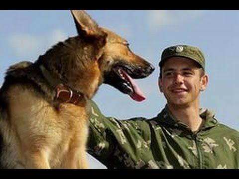 Кинология. Военные собаки.