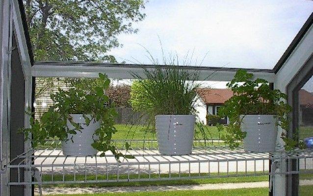 Rostliny proti hmyzu - už žádní komáři u vás doma!