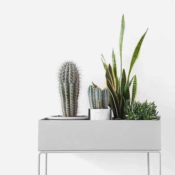 Sollte jeder daheim stehen haben: Die Plant Box von Ferm Living. Jetzt entdecken und shoppen: https://sturbock.me/3Vp