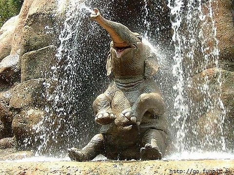 This was the beginning of my love-affair with elephants; Jungle Cruise at Disneyworld happy elephant :)