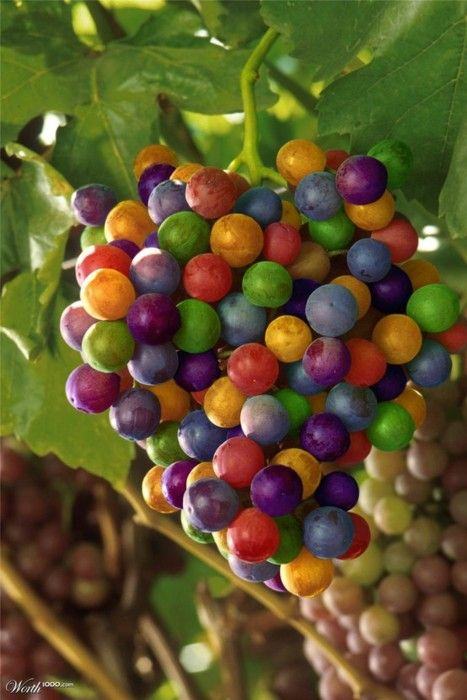 Grapes of many, many colors make a pretty picture. I love it!!