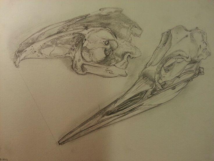 Rabbit and bird skulls