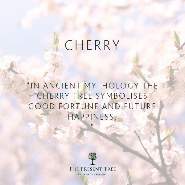 Pin By Annmarie Maybury Was Twist On Meditation And Guides That Are Supporting Cherry Blossom Quotes Cherry Tree Blossom Quotes