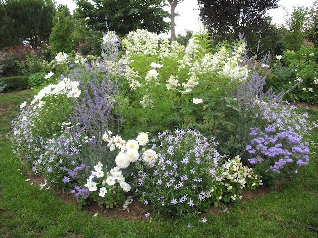 hydrangea Unique and flowers