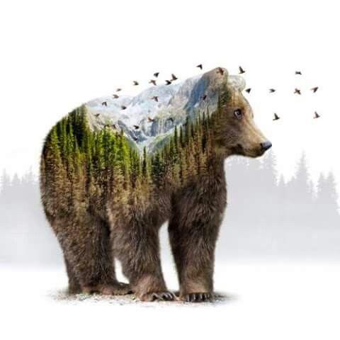 Mejores 8 imágenes de osos en Pinterest | Tótems, Animales y ...