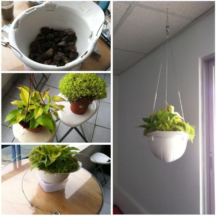 Idea decoraci n oficina vegetaci n colgante planta - Enredaderas de interior ...