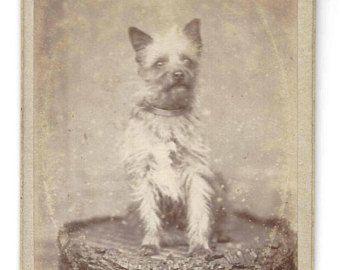 Rare Antique Dog CDV Carte De Viste 1860's Cabinet Card Dog Photo Terrier Table Black White Collar